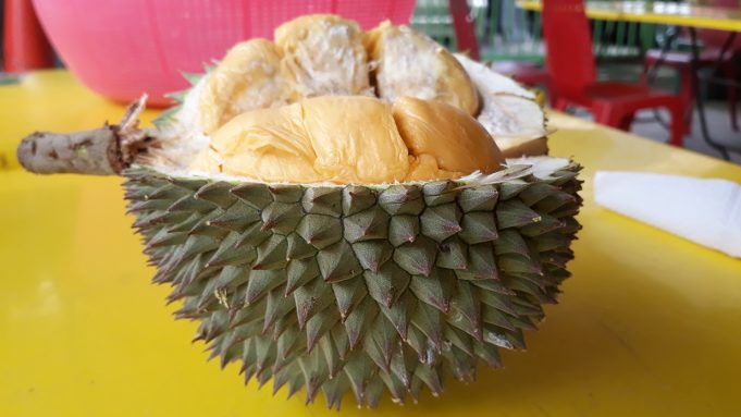 Exotic Fruit – The Black Thorn Durian